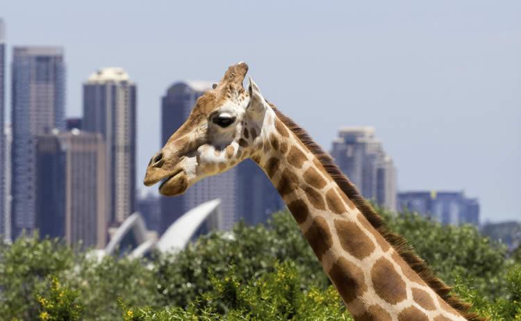 バードショーにアザラシショーに公開プロポーズ!サプライズ満載のタロンガ動物園