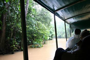熱帯雨林をアーミーダックで爆走