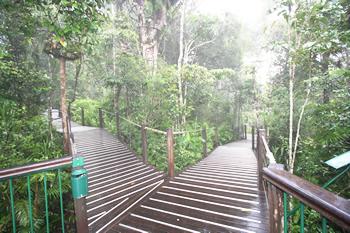 熱帯雨林を散歩