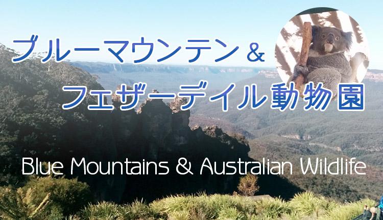 【世界遺産ブルーマウンテンズ&ワイルドライフパーク】 AATKingsの英語ツアーに参加しました!