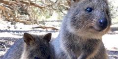 パースの定番ツアーをご紹介。西オーストラリアの観光地を攻略!