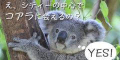 ワイルドライフ・シドニーズー! シティーの真ん中でコアラに会える!!