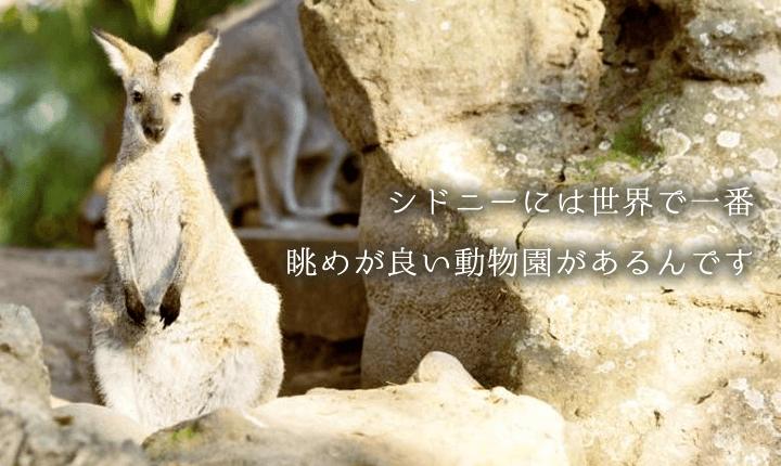 タロンガ動物園 割引チケット